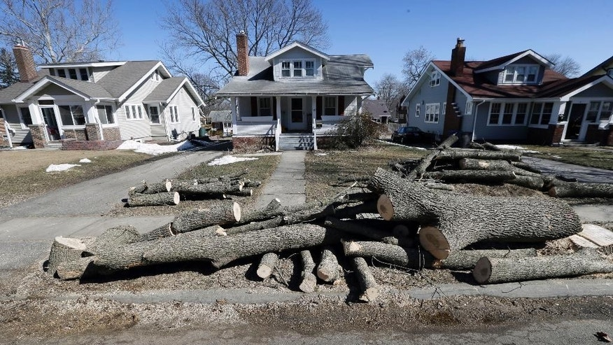 Logs from a recently cut down ash tree sit in front of home, Monday, March 9, 2015, in Des Moines, Iowa. Daunted by the cost and difficulty of stopping the emerald ash borer, many cities are choosing to destroy their trees before the insect can. Chain saws are roaring in towns where up to 40 percent of the trees are ashes, and rows of stumps line streets once covered by a canopy of leaves. (AP Photo/Charlie Neibergall)