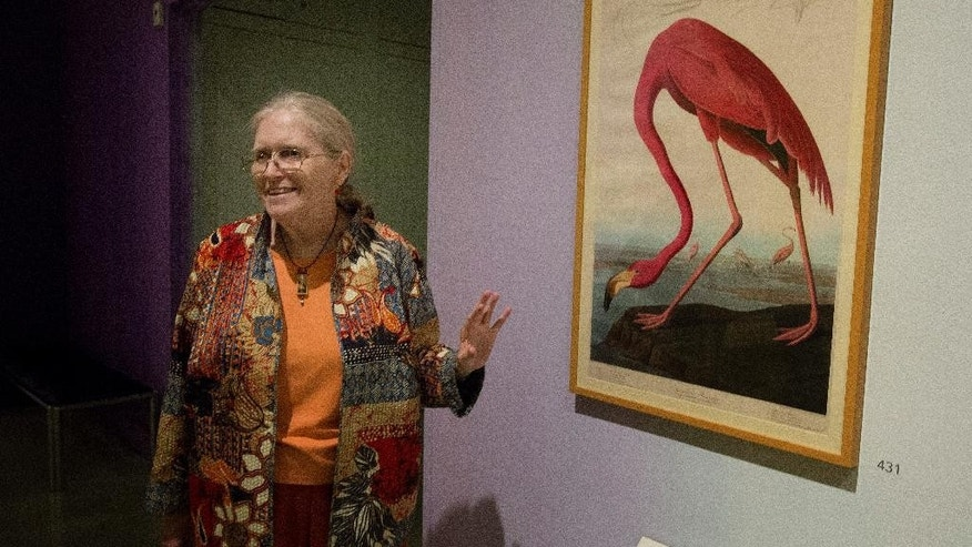 "In this March 17, 2015 photo, Rebecca Smith, Head, Special Collections at HistoryMiami in Miami, discusses a flamingo painting displayed at the Audubon show.   A new HistoryMiami exhibit shows every image printed for Audubon's masterpiece, ""The Birds of America.""   (AP Photo/J Pat Carter)"