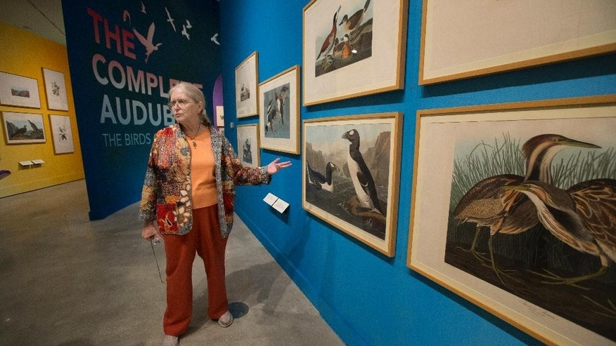 "In this March 17, 2015 photo, Rebecca Smith, Head, Special Collections at HistoryMiami in Miami, discusses Audubon's painting of ""Great Auk"" birds, which are now extinct.  A new HistoryMiami exhibit shows every image printed for Audubon's masterpiece, ""The Birds of America. "" (AP Photo/J Pat Carter)"