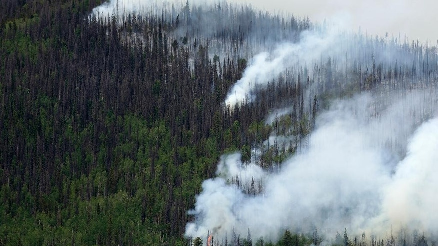 FILE - In this June 24, 2013 file photo, dead, brown, beetle-killed trees mix with live trees as a wildfire burns west of Creede, Colo. Mountain pine beetles have left vast tracts of dead, dry trees in the West, raising fears of far-reaching wildfires, but a 2015 University of Colorado study has found no evidence the bugs are making fires spread farther. (AP Photo/Gregory Bull, File)