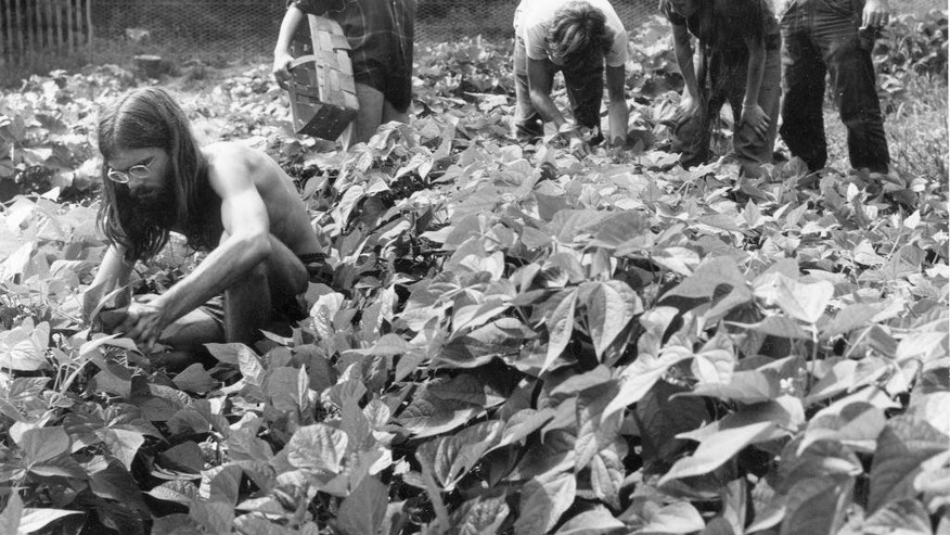 In this circa 1970's photo provided by the Vermont Historical Society, young people work in a garden at the Pikes Falls community in Jamaica, Vt. The state's population jumped 15 percent in the 1970s, with more than half of the increase coming from people moving from out of state to experimental communes in Vermont. The state historical society is collecting stories and artifacts in a two-year study to document lasting influence the 1970s had on the state. (AP Photo/Rebecca Lepkoff collection of the Vermont Historical Society)