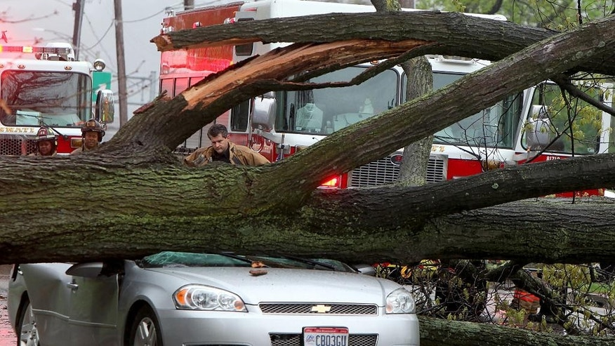 Police investigate after a car was crushed by a tree killing the driver Sunday, April 19, 2015 in Cincinnati. (Cameron Knight/The Cincinnati Enquirer via AP)  MANDATORY CREDIT;  NO SALES