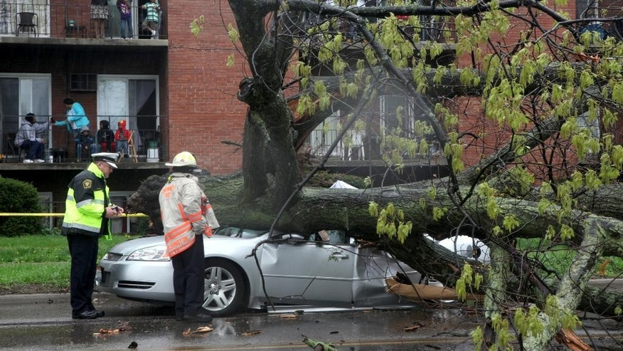 Police investigate after a car traveling north on Reading Road was crushed by a tree killing the driver Sunday, April 19, 2015 in Cincinnati. (Cameron Knight/The Cincinnati Enquirer via AP)  MANDATORY CREDIT;  NO SALES