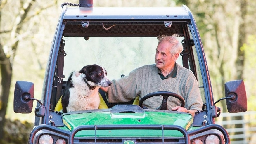 Tom Hamilton and Don the dog at Kirkton Farm in Abington, Scotland who caused tailbacks on a busy motorway this morning  Wednesday April 22, 2015.  The border collie inspired a traffic scare and social media gold after he plunged down a hill and onto a highway in his master's vehicle.  Wednesday's incident near Abington, Scotland, began when farmer Tom Hamilton left Don sitting in his utility vehicle as he inspected lambs. He insists the parking brake was on.  (Danny Lawson/PA via AP) UNITED KINGDOM OUT