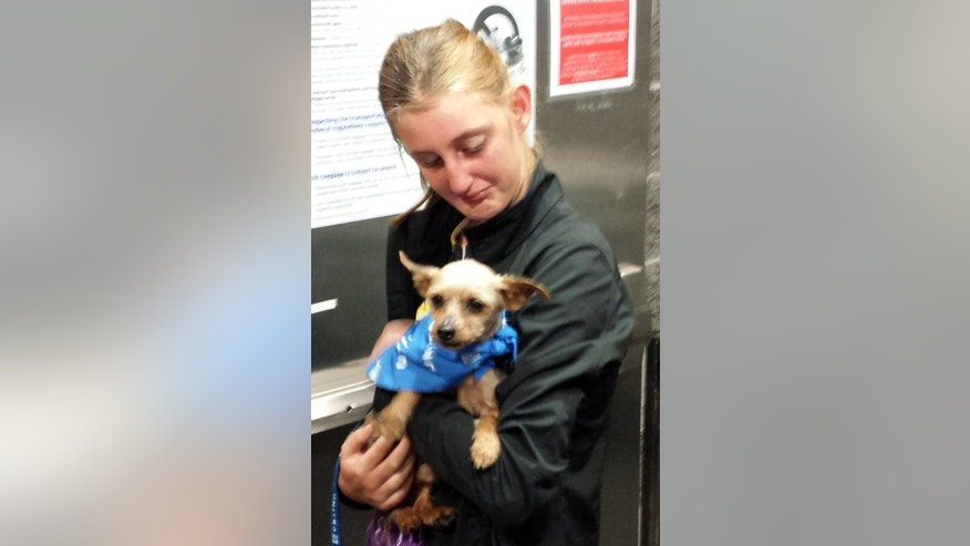 "Karisa Lambert, 14, is reunited with her Yorkshire terrier ""Sam,"" whom was stolen in 2012, and picked up as a stray in Iowa, at New Orleans' international airport in Kenner, La., Wednesday, April 29, 2015. Thomas Lambert said his brother gave Sam to Karisa when she was 4 years old. The dog disappeared in June or July 2012 from their back yard, which is surrounded by woods in a rural part of the New Orleans suburb. ""We had just given him up for dead,"" he said. (AP Photo/Bill Fuller)"