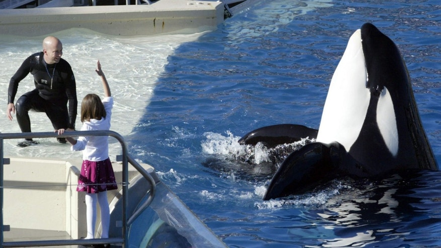 Nov. 26, 2006: SeaWorld Adventure Park trainer Ken Peters, left, looks to a killer whale during a performance at Shamu Stadium inside the theme park in San Diego.