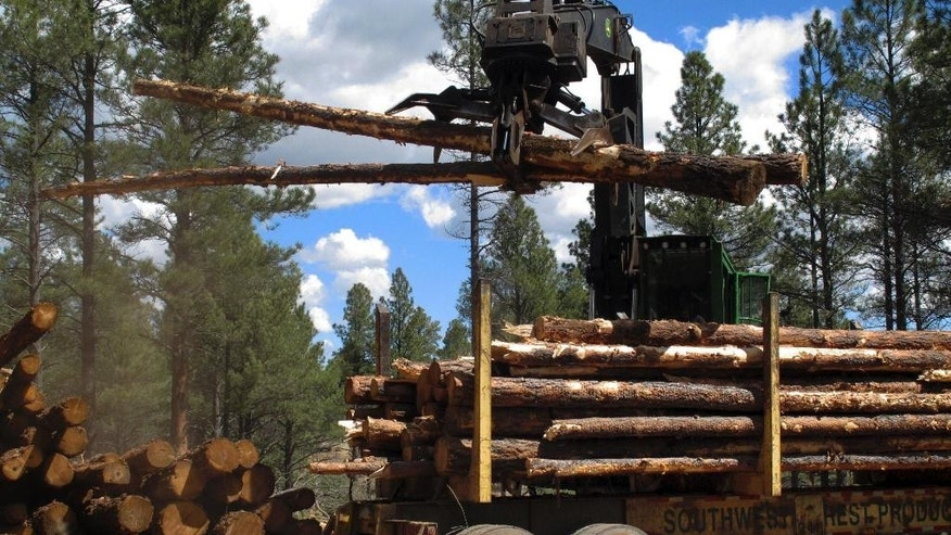 In this April 28, 2015 photo, a machine stacks logs in the Coconino National Forest just outside Flagstaff, Ariz. The work is part of an effort to restore a 2.4 million-acre forested area in northern Arizona. (AP Photo/Felicia Fonseca)