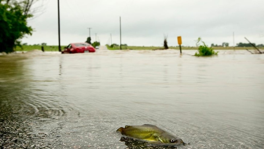 A catfish and a car are stranded on Gregg Lane after heavy rains caused flooding, Wednesday May 6, 2015, in Manor, Texas. (Jay Janner/Austin American-Statesman via AP)  AUSTIN CHRONICLE OUT, COMMUNITY IMPACT OUT, INTERNET AND TV MUST CREDIT PHOTOGRAPHER AND STATESMAN.COM, MAGS OUT