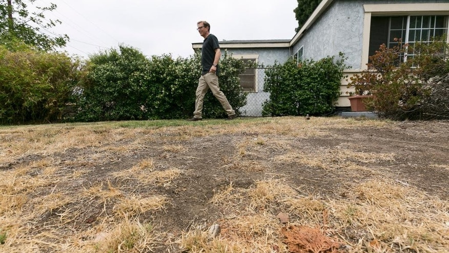 FILE:  In this file photo from Thursday, July 17, 2014, Michael Korte walks on his brown lawn at his home in Glendora, Calif.  Most Californians have heard by now that they should stop watering their lawns to save water in the drought. But there are smaller steps to take, too, from taking shorter showers and doing less laundry to restaurants skipping water at tables. (AP Photo/Damian Dovarganes)