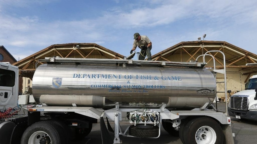 "In this Wednesday, May 13, 2015 photo, Rich Cain of the California Department of Fish and Wildlife, prepares a tanker truck filled with young salmon, called ""smolts"" to be unloaded into a floating net suspended on a barge at Mare Island, Calif. The smolts, have been transported by tanker truck from the Coleman National Fish Hatchery, near Anderson and loaded into the barge for release into San Pablo Bay. Due to the worst drought that California has faced in 40 years, state and federal wildlife officials fear that the smolts, normally released upriver near the hatcheries where they were spawned, would not survive low river flows, warm water and predators to survive the journey to the ocean. (AP Photo/Rich Pedroncelli)"