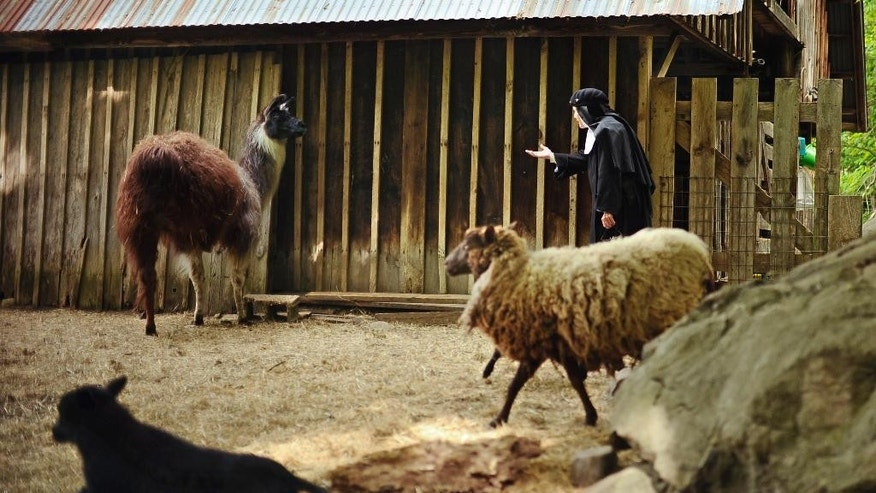 In this Friday, May 15, 2015 photo, Mother Dolores Hart calls out to a llama at the Abbey of Regina Laudis, in Bethlehem, Conn. Mother Dolores, a former actress who is best known for sharing the first on-screen kiss with Elvis Presley, has helped the Abbey which is in need of renovations gain exposure and aid from fans of Presley. (AP Photo/Jessica Hill)