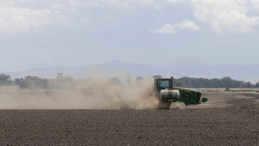 May 18, 2015: A tractor tills the dry land on the acreage  farmed by Gino Celli, near Stockton, Calif. Celli, who farms 1,500 acres of land and manages another 7,000 acres, has senior water rights and draws irrigation water from the Sacramento-San Joaquin River Delta. (AP Photo/Rich Pedroncelli)