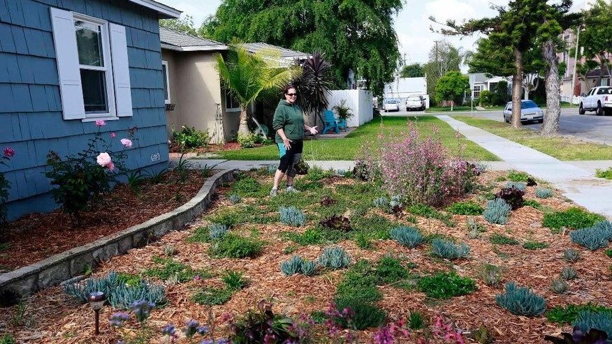FILE- In this April 2, 2015 file photo, Denise Hurst shows her drought-tolerant garden she planted with the help of a city program that offers rebates of $3.50 per square foot for residents who tear up their water-guzzling lawns and plant drought-resistant plants that require little to no watering in Long Beach, Calif. A cash-for-grass program is proving so popular during California's drought that a water wholesaler is considering boosting the budget for turf replacement rebates. Board members of the Metropolitan Water District of Southern California will meet Tuesday, May 26, 2015, to discuss adding $350 million to its lawn rebate program. (AP Photo/Nick Ut, File)