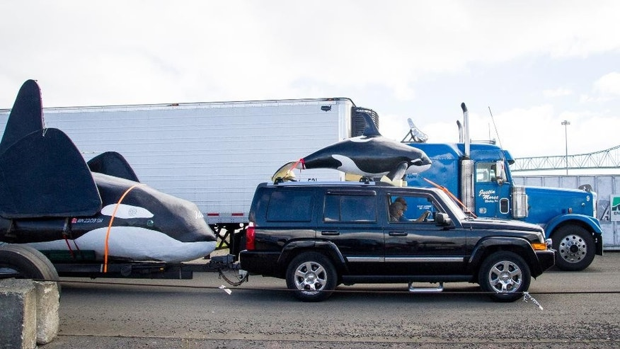 A fake life-sized orca, left, is pulled on the docks of Pier Two in Astoria, Ore., Thursday, June 4, 2015. Officials hope it will scare hundreds of sea lions off the docks on the Oregon coast, but has run into a snag its first day on the job. (Joshua Bessex/Daily Astorian via AP) MANDATORY CREDIT