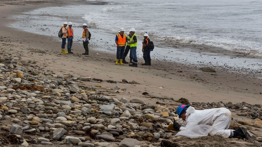 June 10, 2015: Shoreline Cleanup Assessment Technique team members, left, evaluate oil coverage as a hand crew worker scraps areas affected by an oil spill at Refugio State Beach, north of Goleta, Calif.