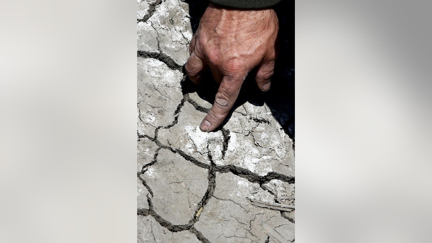 FILE - In this file photo taken Monday, May 18, 2015, farmer Gino Celli checks salt from irrigation water that has dried on the land he farms near Stockton, Calif.  California, grappling with drought, exacted the broadest water cuts on record Friday, June 12, 2015, among farmers and others holding some of the strongest water rights in the state, directing thousands in one of the country's prime farm regions to stop all pumping from three major waterways.  (AP Photo/Rich Pedroncelli, File)