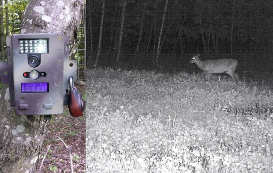 Authorities searching for two escaped killers hope a trail cam like the one on the left captures a suspicious figure along the tree line.(Jason Langdon)