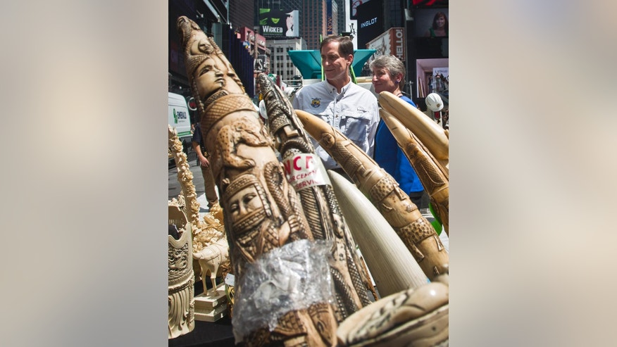 U.S. Fish and Wildlife Director Dan Ashe, left, and U.S. Secretary of Interior Sally Jewell, prepare to select confiscated illegal ivory to crush in an effort to halt elephant poaching and ivory trafficking, Friday, June 19, 2015, at Times Square in New York.  Animal advocates say the trade in ivory threatens to wipe out African elephants.(AP Photo/Bebeto Matthews)
