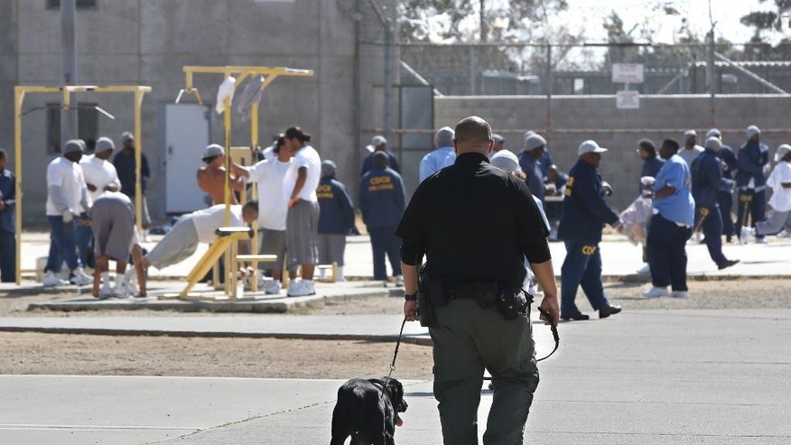 In this photo taken Wednesday May 20, 2015, inmates exercise in the main yard at California State Prison, Solano in Vacaville, Calif. Authorities are investigating the murder of Nicholas Anthony Rodriguez at the prison  in May. An autopsy report reveals that Rodriguez' body was cut apart and most of his major body organs removed, prompting an investigation of whether a riot by dozens of prisoners was used to cover up the homicide.(AP Photo/Rich Pedroncelli)