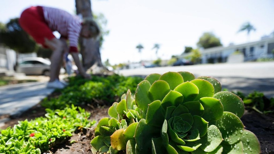 FILE -- In this July 9, 2014 file photo a woman works among drought-tolerant plants in her front yard in San Diego. Water use in San Diego plunged 24 percent in June well past it's target of 16 percent. (AP Photo/Gregory Bull, file)