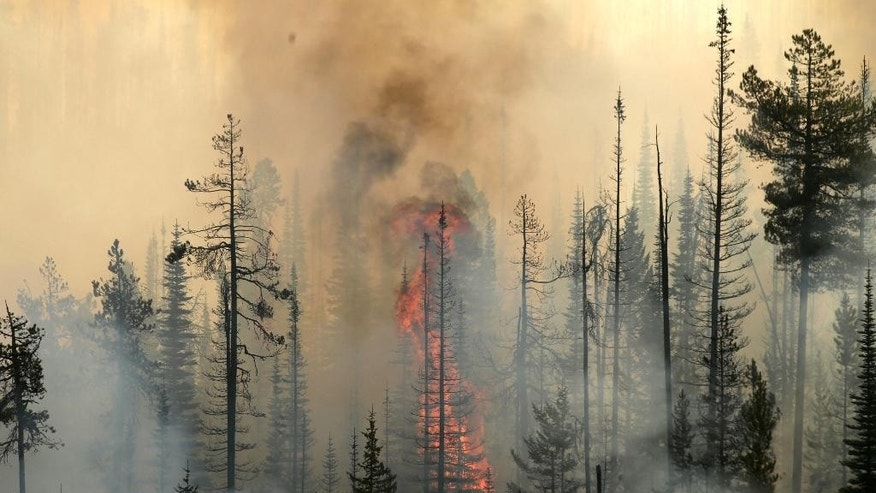 In this aerial photo, a wildfire consumes a tree in a burning forest near Omak, Wash., on  Thursday, Aug. 20, 2015. Firefighters on several fronts are fighting against raging wildfires advancing on towns in the north-central part of the state.  (Bettina Hansen/The Seattle Times via AP)