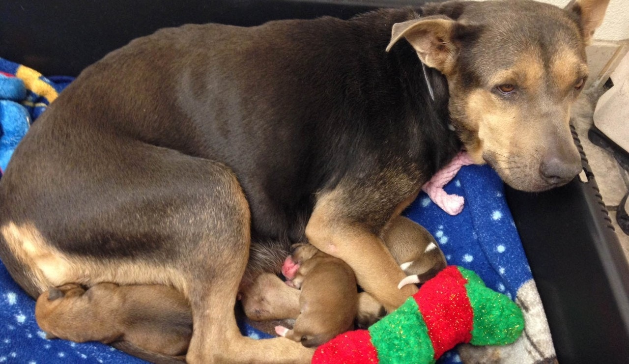 Phoenix police rescue puppy trapped inside pipe for 10 hours