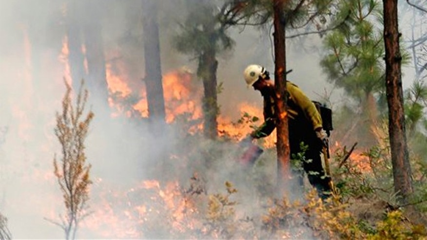 Aug. 27, 2015: A firefighter uses a drip torch to burn the edges of an area up to a fire break in Chelan, Wash. The complex of fires burning throughout the area are the largest in state history.