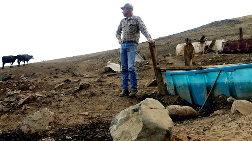 July 2, 2015: Rancher Steve Drumright looks toward his cattle, grazing on a barren hillside in Tulare County, outside of Porterville, Calif. Drumright's herd is forced to search the parched Tulare County hills for the dwindling vegetation as California endures a fourth year of drought.