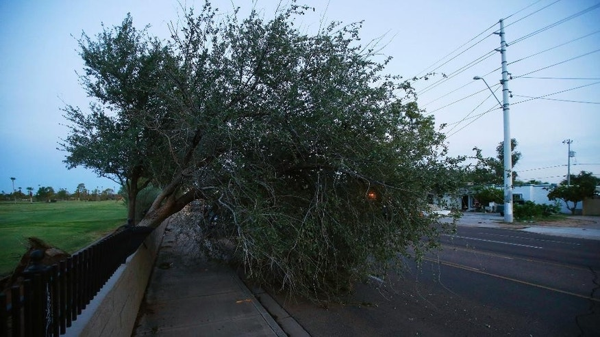 A downed tree blocks two lanes of a main street early on Tuesday, Sept. 1, 2015 in Phoenix, after monsoon storms hit the Phoenix area Monday night knocking out power to thousands, delaying air travel, and stranding motorists in flash floods. The storms began moving through the area around sundown with high winds, lightning and heavy rain. (AP Photo/Ross D. Franklin)