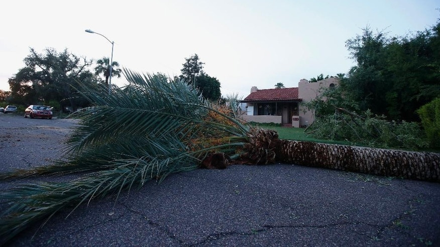 A downed palm tree blocks the way for traffic on a residential street early on Tuesday, Sept. 1, 2015 in Phoenix, after monsoon storms hit the Phoenix area Monday night knocking out power to thousands, delaying air travel, and stranding motorists in flash floods.  The storms began moving through the area around sundown with high winds, lightning and heavy rain. (AP Photo/Ross D. Franklin)
