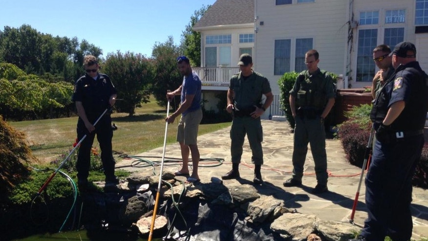 In this photo provided by the Montgomery County Police, officers capture an alligator that was found in the backyard of a home in Brookeville, Md., Saturday, Sept. 12, 2015. After draining the pond police say officers caught the three-foot alligator. It was taken to the Catoctin Wildlife Preserve and Zoo in Frederick County. (Montgomery County Police via AP)