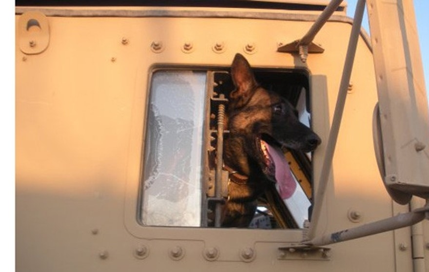 Mike, a 9-year-old Belgian Malinois, in Iraq.