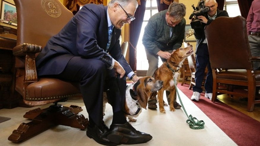 Oct. 15, 2015: B.J. Duft, second from left, of Vashon Island, Wash., holds his dogs Tillie, right, and Phoebe, as they visit with Washington Gov. Jay Inslee, left, in his office in Olympia, Wash. Tillie was given the 'Washingtonian of the Day' award by the governor for standing by Phoebe for nearly a week after they strayed from their home and Phoebe fell into a old cistern. (AP Photo/Ted S. Warren)