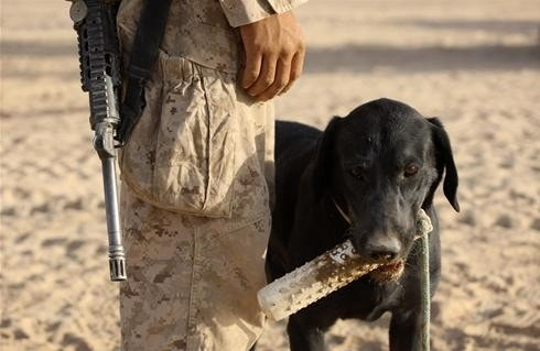 Military working dogs now guaranteed a trip home with their handlers