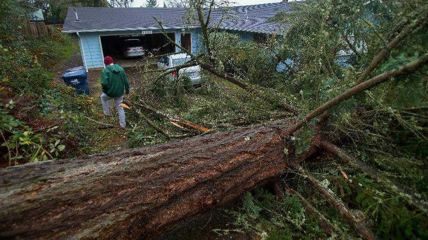 Shane Van der Zwan walks across his driveway Thursday, Dec. 10, 2015 in Eugene, Ore., to survey damage after a large Douglas fir tree fell overnight during a wind and rain storm that hit the southern Willamette valley after midnight. (Brian Davies/The Register-Guard via AP) MANDATORY CREDIT