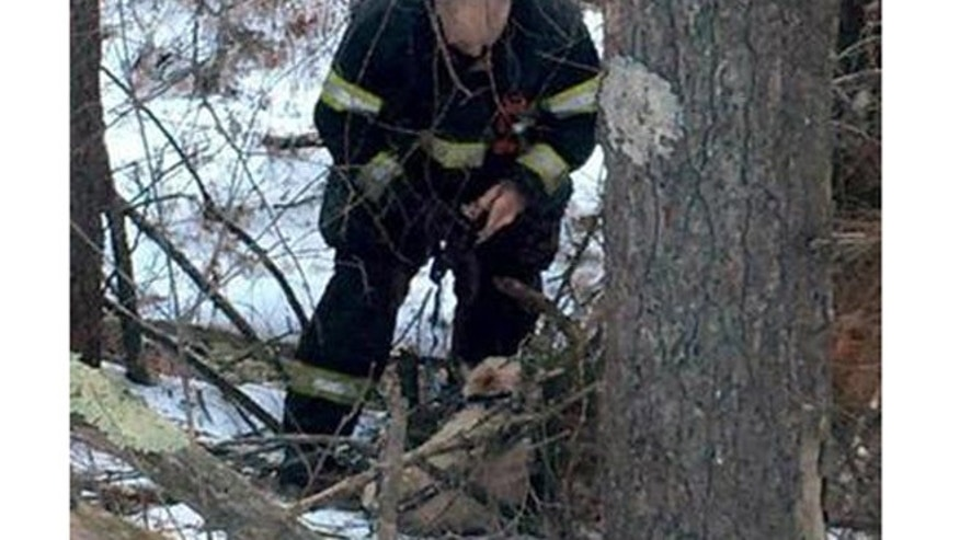 Firefighter works to untangle injured dog, Annabellle. (Orange Police Department)