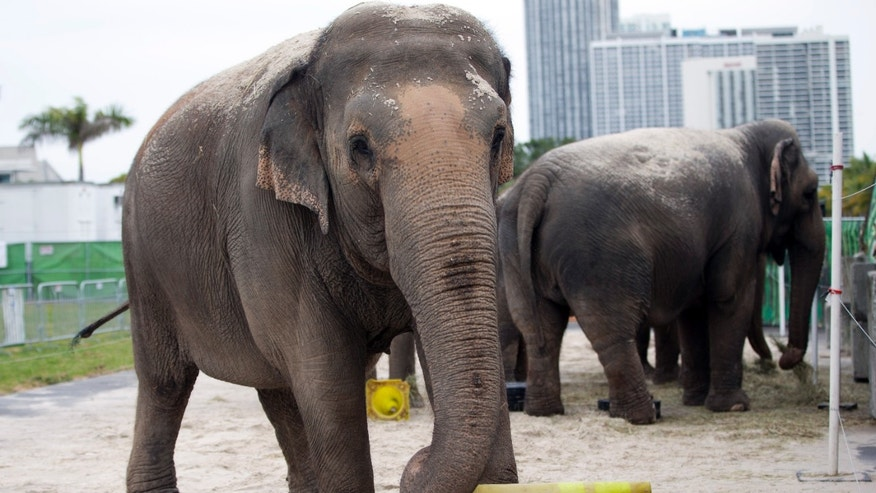 Ringling Bros. to Retire All Circus Elephants Two Years Early