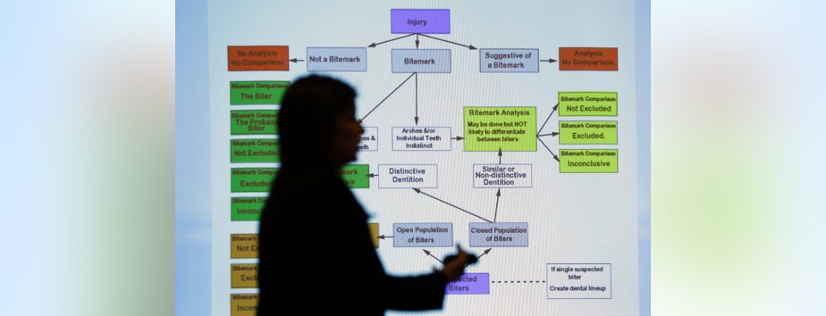 Lynn Garcia uses a chart as she takes part in a Texas Forensic Science Commission meeting to consider recommendations against using bite mark analysis in criminal cases, Thursday, Feb. 11, 2016, in Austin, Texas. The commission  moved forward with the recommendation that bite mark evidence not be used pending further research. (AP Photo/Eric Gay)