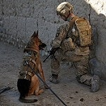 Troops betrayed as Army dumps hundreds of heroic war dogs