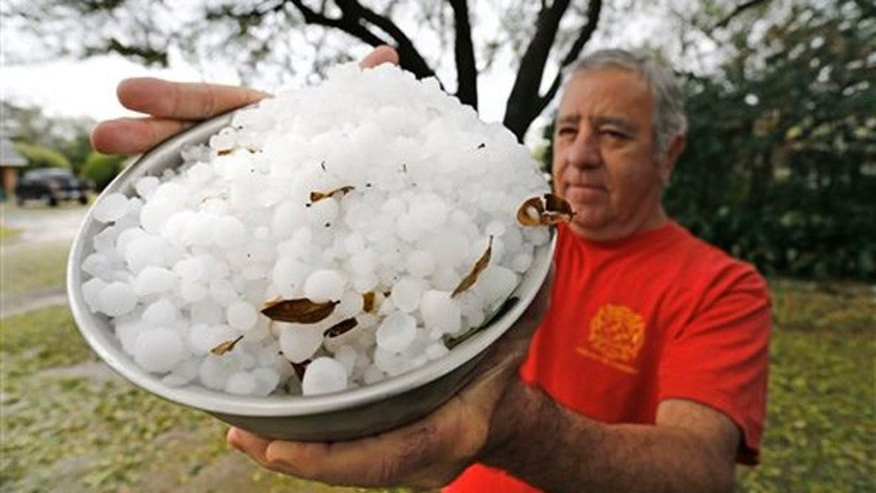 L.C. Martin holds a bowl-full of hail stones from his neighborhood south of TCU, Thursday, March 17, 2016 in Fort Worth, Texas. Hail the size of golf balls coated parts of North Texas, broke windows, damaged police vehicles and killed exotic birds at the Fort Worth Zoo.
