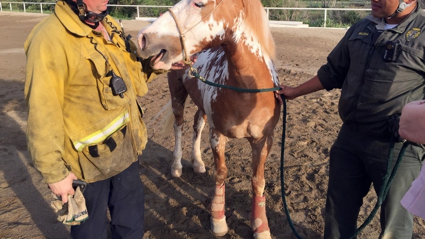 Firefighters tend to a horse after it was hoisted from a ravine.