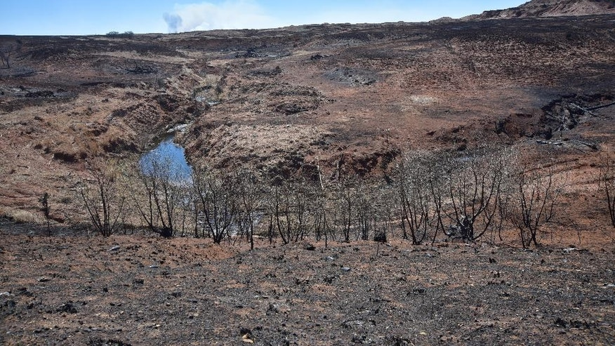 Charred prairies are seen Thursday, March 24, 2016 near Medicine Lodge, Kan. as smoke rises in the distance from the continuing burning fire. The fire that started Tuesday in Oklahoma has now burnt near 400, 000 acres in Kansas and Oklahoma. (Andrew Whitaker/The Hutchinson News via AP)