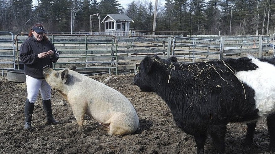 Lulu the pig with Baby the blind cow in 2013.