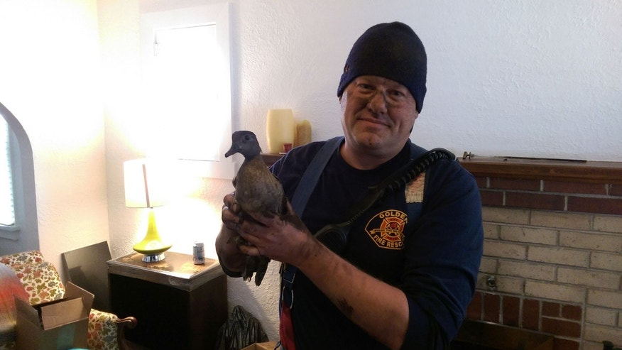Firefighters saved a duck from a chimney on Saturday.