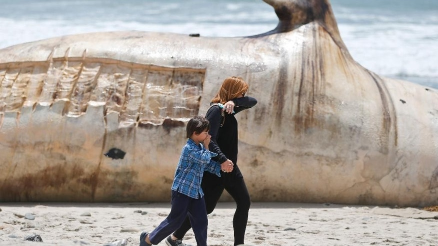 A woman and a young boy cover part of their noses as the walk past a massive carcass of a whale at a popular California surfing spot Tuesday, April 26, 2016, in San Clemente, Calif. Authorities are trying to decide what to do with the massive, rotting carcass.  (AP Photo/Lenny Ignelzi)
