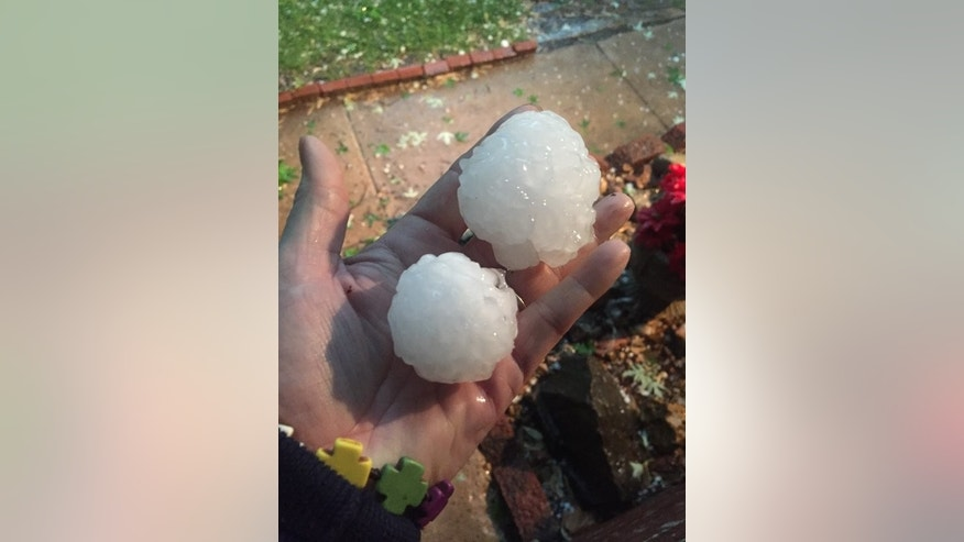 Susan Goodwyn holds hail in her hand Tuesday, April 26, 2016, in Wichita, Kan. The National Weather Service was warning of the possibility of hail as big as grapefruits in some areas on Tuesday amid storms in parts of the central and eastern U.S. Some smaller hail — the size of quarters or smaller — had been reported in Illinois, Indiana, Kansas, Missouri, Oklahoma, Ohio and Texas as of Tuesday afternoon. (Susan Goodwyn/SMGPhotos via AP)
