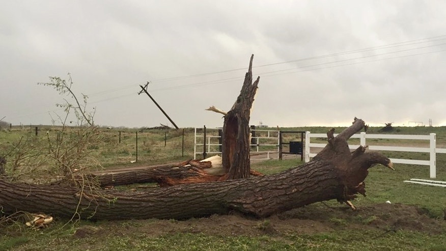 A toppled tree lies on the ground after a tornado was reported in Weld County outside Wiggins, Colo., Saturday, May 7, 2016. Spring storms menaced parts of the West on Saturday, bringing hail and a tornado sighting in Colorado and deadly driving conditions in Arizona. (Kristen Skovira/KMGH-Channel 7 via AP) MANDATORY CREDIT