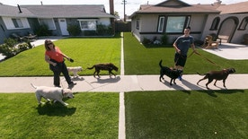 FILE In this May 6, 2015 file photo, local resident Martha Mattison, left, helps out her son Jacob, 14, with his dog walking business as they walk past recently installed synthetic grass, seen at right, in Garden Grove, Calif. California water officials say they will consider dropping a mandate requiring conservation in the state's fifth year of drought. The State Water Resources Control Board on Wednesday, May 18, 2016, will vote on whether to give local water districts control of setting their own conservation targets.  (AP Photo/Damian Dovarganes, File)