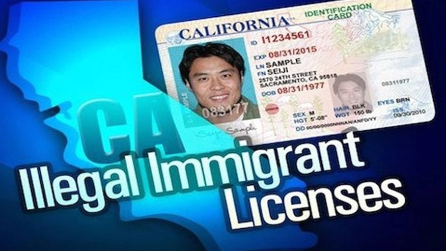Evidence scant California's licensed illegal immigrant drivers ...