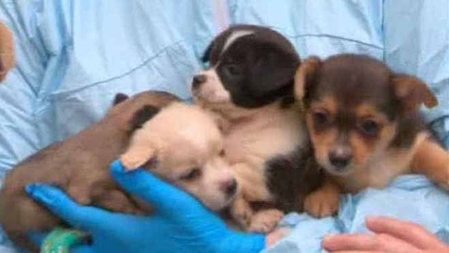 Authorities seized 276 small dogs from a New Jersey home. (Monmouth County Sheriff's Office)